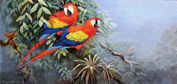 Flames of the Forest Scarlet Macaws