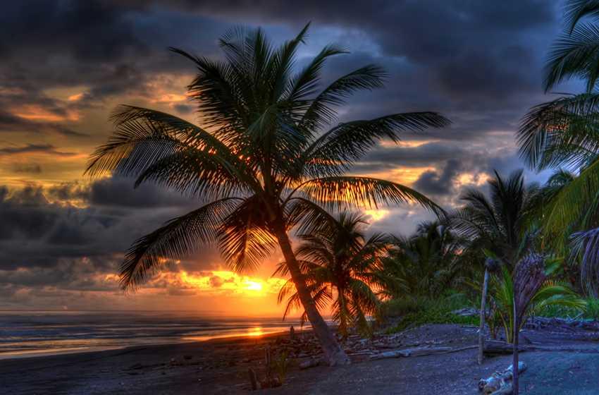 Wedding Palm